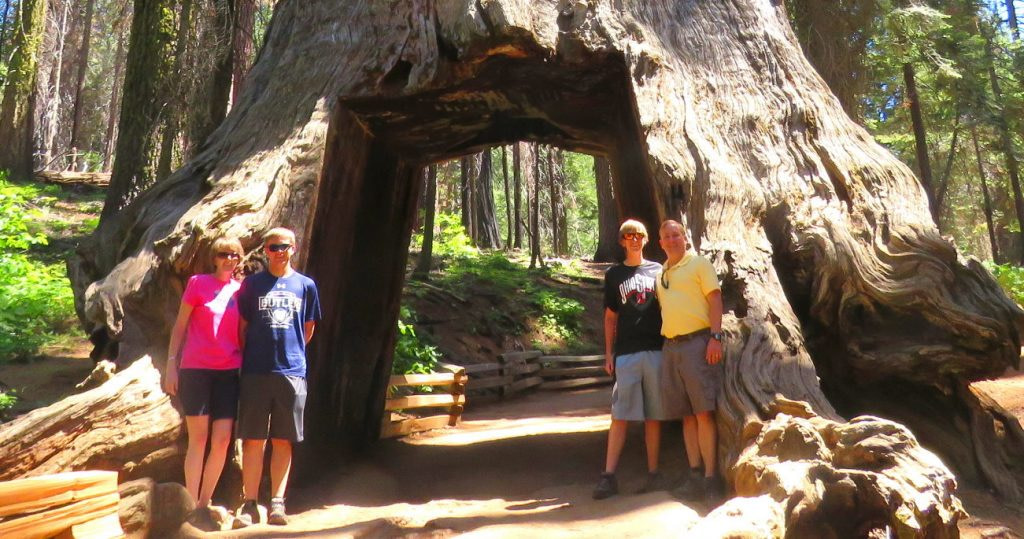Grizzly Giant and California Tunnel Tree