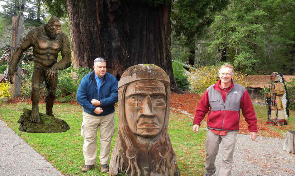 grand father tree by richardson grove