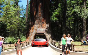 Things to do in Redwood Country and Must-See Tourist Attractions in Northern California