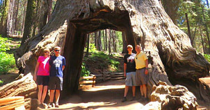 Grizzly Giant and California Tunnel