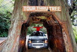 Things to do in Redwood Country and Muse-See Tourist Attractions in Northern California
