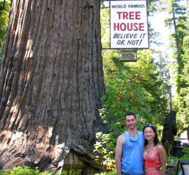 The World-Famous Tree House